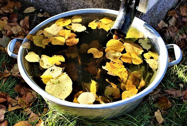 autumn-2939669_640